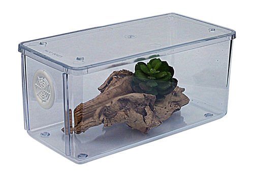 Mini Terrestrial Vivarium