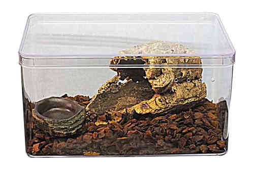 Large Clear Plastic Vivarium