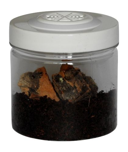 Small Insect Rearing Jar