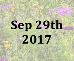 Introducing Wild Flower Meadows with Ian Donovan - Fri 29th Sept 2017