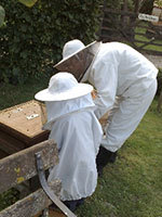Jill Sales - Beekeeping Courses Tutor