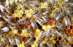 The Basics Of Beekeeping