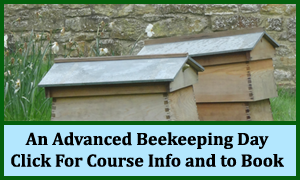 An Advanced Beekeeping Day Course