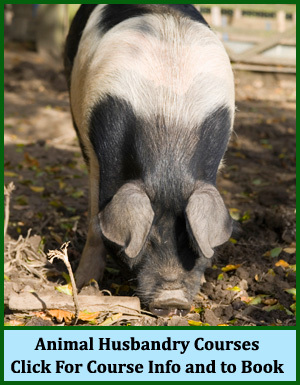 Animal Husbandry Courses