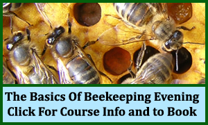 The Basics Of Beekeeping Evening Course