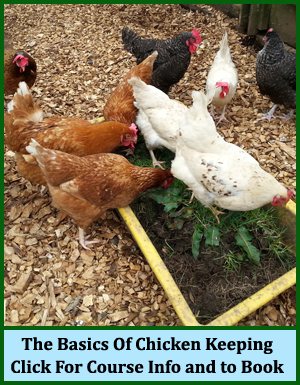 The Basics Of Chicken Keeping Evening Course For Beginners