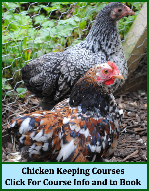 Chicken Keeping Courses