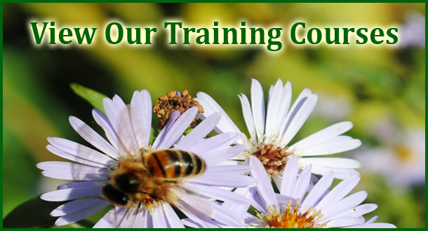 Mantel Farm Training Courses - Beginners Beekeeping Courses