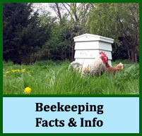Beekeeping Facts and Info