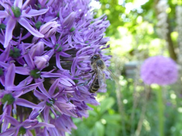 Amanda's Beekeeping Notes For June