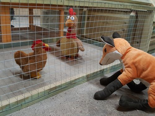 keeping poultry safe