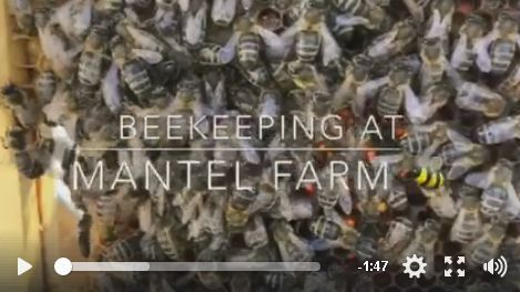 wonderful mantel farm video