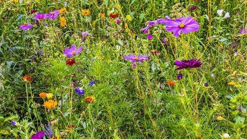 wild flower meadows talk